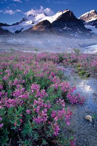 Jasper National Park - Athabasca Glacier