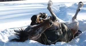 Horses_in_Snow_at_Brook_Hil