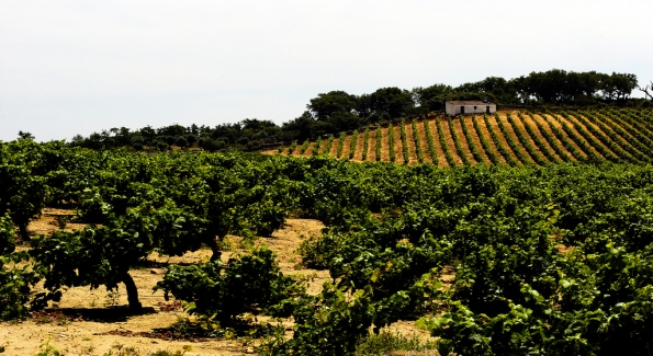 Portugal's Alentejo region is producing world class blends.