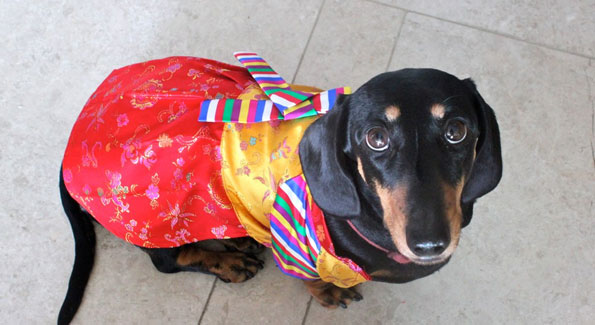 Dogs in costumes (Photo by ejorpin via Flickr)